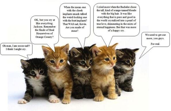 kittens reality tv sad