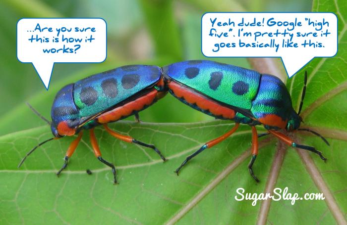 High five beetles